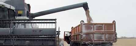 Сельхозпроизводителям Курганской области частично компенсируют потери