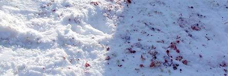 В Кургане пройдут похороны начальника ЖКХ Курганской области, убитого 20 декабря