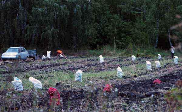 В Курганской области массовая уборочная компания начнется в сентябре