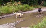 В Кургане власти рассказали о нехватке денег на отлов бродячих собак
