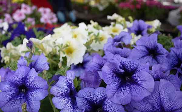 В Кургане юноше грозит срок за кражу цветов для любимой девушки