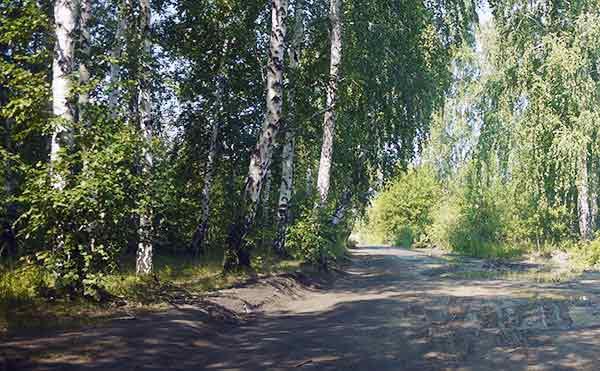 В Курганской области у 14 человек обнаружили клещевой энцефалит