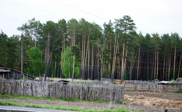 В Зауралье замдиректора лесного хозяйства незаконно вырубил древесины на 700 тысяч рублей