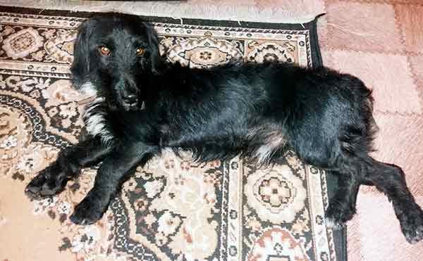 В Кургане пес, который неделю катался на маршрутках, нашел временное жилье