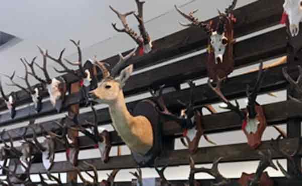 В Курганской области браконьеры убили 19 косуль, 2 лося и одного барсука