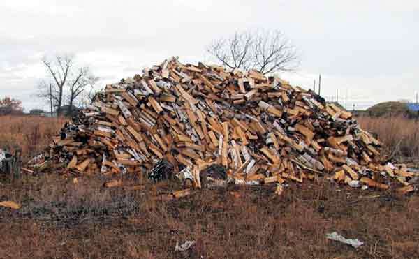 В Курганской области «черный лесоруб» украл древесины на миллион рублей