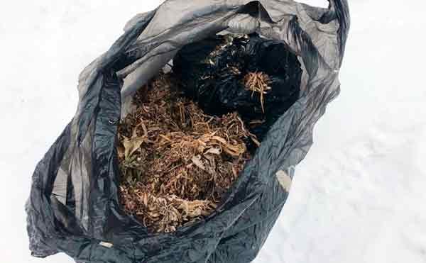 В Курганской области сельского безработного поймали с кульком марихуаны