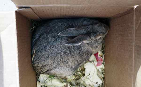 В Зауралье женщина отправилась в колонию за кражу двух кроликов