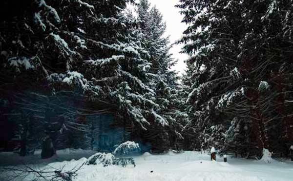 Курганские спасатели нашли в ночном лесу заблудившихся молодых людей