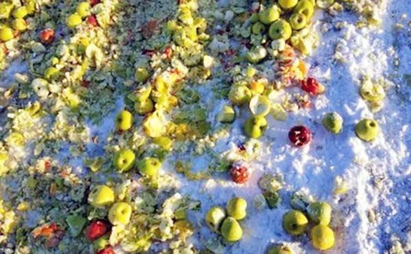 В Курганской области бульдозер раздавил более тонны санкционных яблок