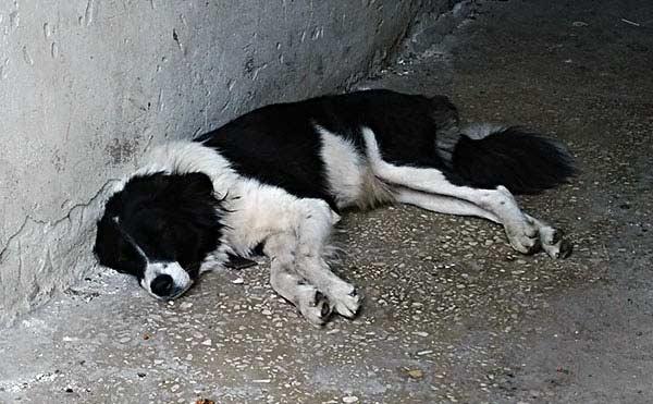 В Курганской области на ребенка напали две бесхозные собаки