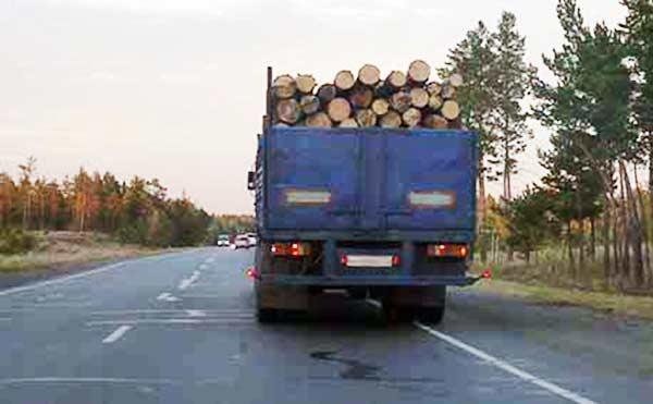 В Курганской области задержали «черных лесорубов», воровавших лес КАМАЗами