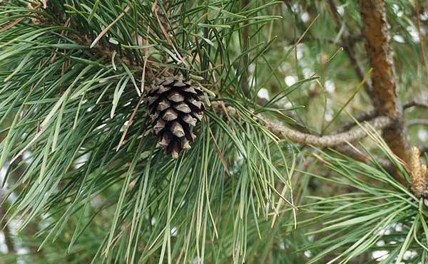 Жителям Зауралья напомнили о штрафах за незаконную рубку елок