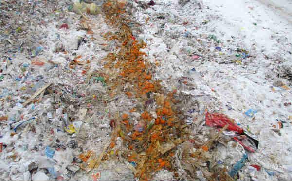 В Кургане бульдозером раздавили 176 килограммов мандарин неизвестного происхождения