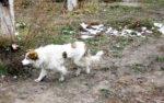 В Кургане за год поймали 318 безнадзорных животных