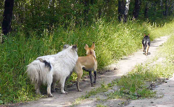 В Курганской области от укусов животных пострадали 2575 человек
