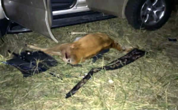 В Курганской области браконьер заплатит 400 тысяч рублей за убийство двух косуль
