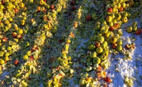 В Курганской области с начала 2019 года уничтожили 8 тонн санкционных овощей и фруктов