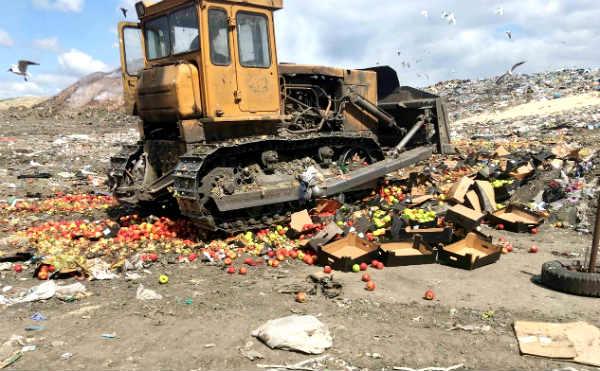 В Кургане более трех тонн санкционных яблок уничтожили на Шуховском полигоне