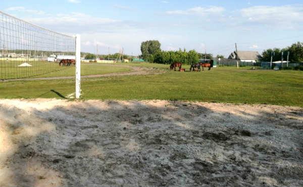В Курганской области на спортплощадку завезли песок с собачьим трупом