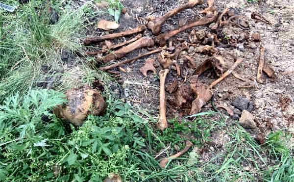В огороде под Курганом нашли человеческие кости