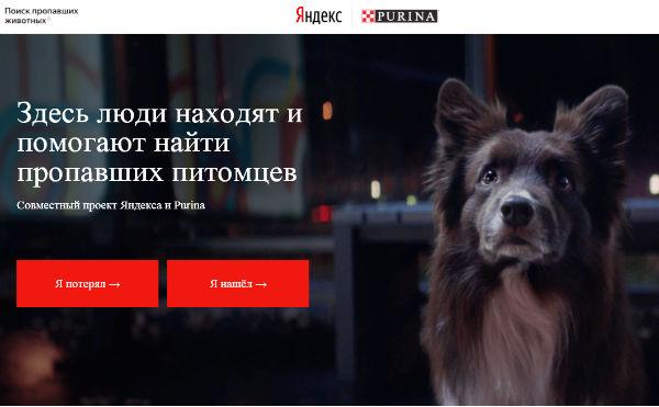 Яндекс и PURINA запустили в Кургане специальный проект по поиску домашних животных