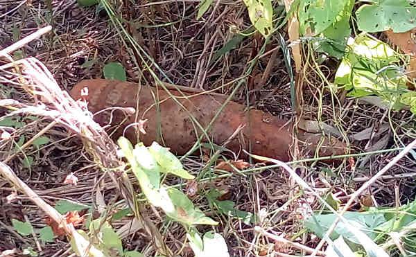 В Кургане на набережной нашли бронебойный снаряд