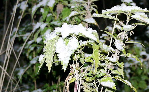 В Курганской области ждут снег, дождь и шквалистый ветер