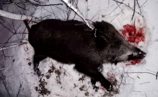 В Курганской области на двух браконьеров завели уголовное дело