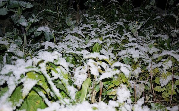 В Зауралье ожидаются заморозки до минус четырех